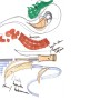 Hotel Sto te Noorwegen - Giesen Architectuur giesen bouwen houtskelet hout strobouw organisch bouwen constructie ecologische architect architectuur groen landelijk modern strak design rieten kap biobased duurzaam biologisch